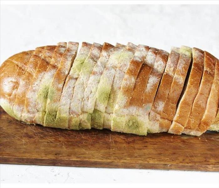 Mold Remediation Explaining How and Why Mold Grows on Bread