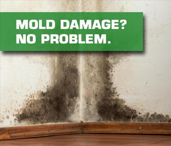 Mold Remediation Laguna Beach/Dana Point Residents:  Follow These Mold Safety Tips If You Suspect Mold