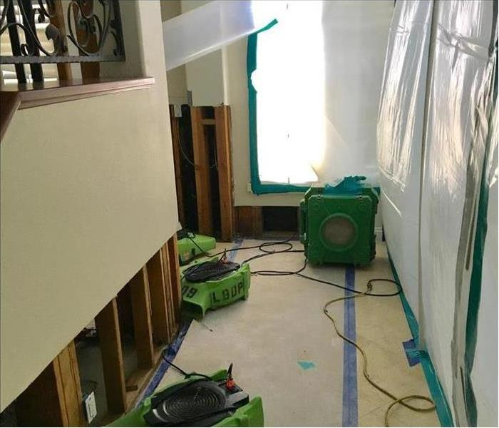 Mold Remediation 4 Facts About Black Mold